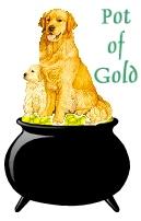 Pot of Gold (Golden Retriever)