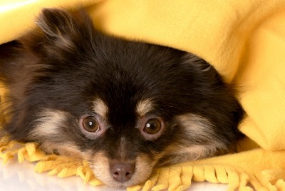 Help Your Dog With Fear of Noises