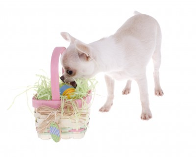 Easter Safety for Your Pets