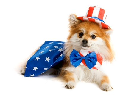 4th of July Safety for Your Dog