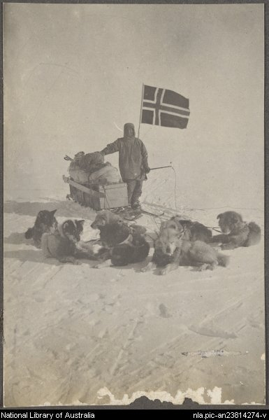 Samoyeds in the South Pole Expedition, December 14, 1911