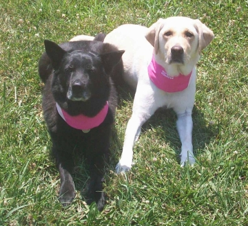 Sephi & Maya Wearing Pink Cool-It Pet Bandana