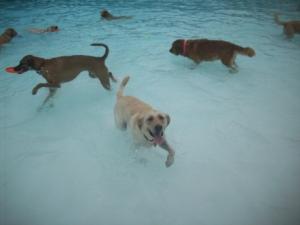 Maya Swimming