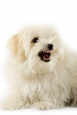 Why Dogs Growl