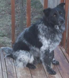 Pierson Rescue Dog