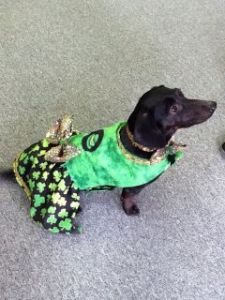 Roxy Dressed in St. Patrick's Day Style
