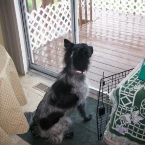 Pierson Watching the Rain 1