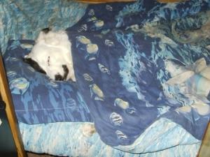 Rocky Sleeping
