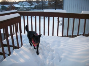 Sephi on the porch after playing in the snow.