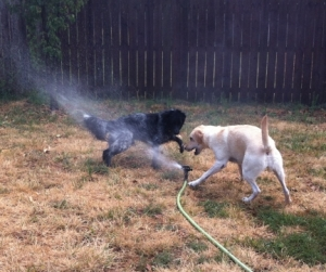 Maya and Pierson Playing in Sprinkler