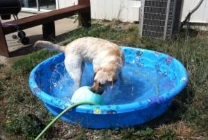 Maya Playing in the Pool