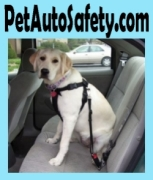 PetAutoSafety.com