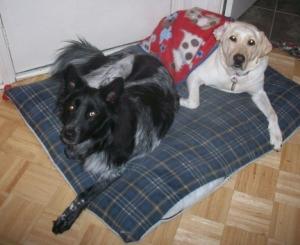 Maya & Pierson on Dog Bed