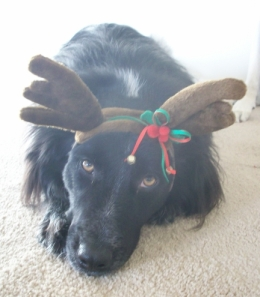 Mr. Pierson Fluffybutt. Qualifications: Genetically inclined to herd the other reindeer to wherever they need to go.
