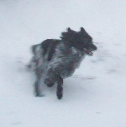 Pierson is having a great time running around in the snow.