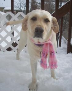 Snow Fun Dec 2012 011