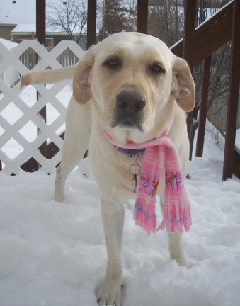 Maya is wearing her hand-made scarf from Bow Wow Wow Gifts.