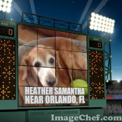 Sweet, sweet Heather lost her owner to cancer.