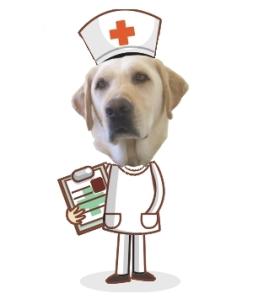 Vet and Nurse Maya have confirmed Pierson has no underlying health issues that caused his seizure last week.