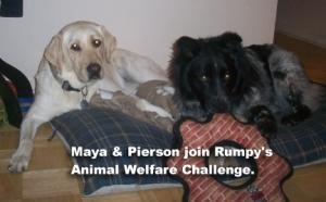 Rumpy's Challenge