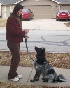 Teaching the 'look' command to get my dog Pierson's attention when we see other dogs.