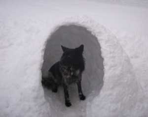 Snow Dog House