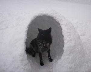 Snow Dog House