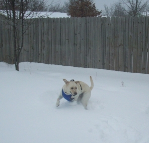 Maya running in the snow.