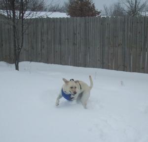 Maya running in the snow.