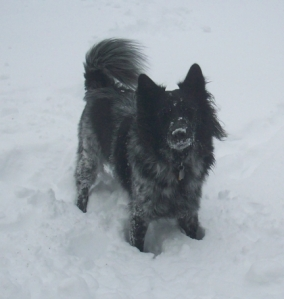Dog Pierson standing in snow.
