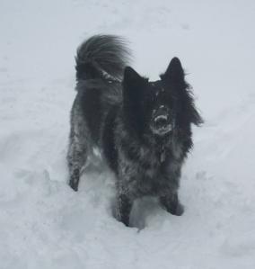 Dog Pierson standing in snow.