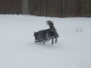 My dog Pierson playing in snow.