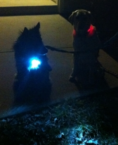 My dogs wearing dog collars with lights.