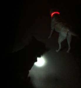 Dogs Wearing Light Up Dog Collars