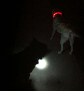 Dogs Wearing Light Up Dog Collars