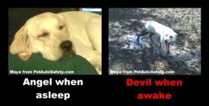 My dog Maya as an angel and devil