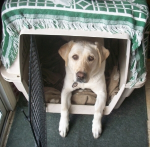 Maya in her pet crate