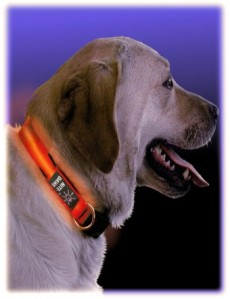 NiteDawg Dog Collar