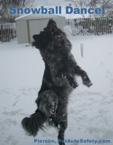 My Dog Pierson Dancing for Snowballs