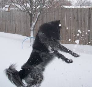 My Dog Pierson Doesn't Catch the Snowball