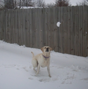 My Dog Wants to Catch a Snowball
