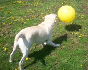 Maya Yellow Ball 3