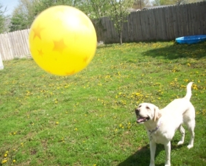 Maya Yellow Ball 2