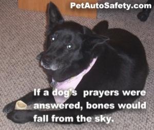 Sephi Loves Bones