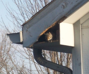 Squirrel Peeking