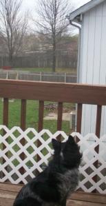 Pierson Watching Squirrel