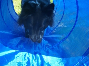 Pierson in the Agility Tunnel