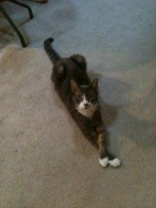 Photo Deuce the Cat