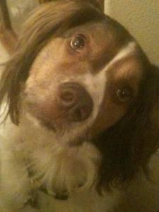 Photo of Dog Mos 2
