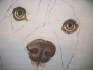 Drawing Mos Close-Up Eyes and Nose